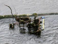 Supermarket Trolley in River